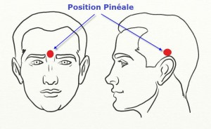 glande pinéale - ostéopathe