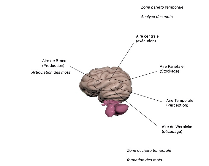 langage dyslexie ostéopathie